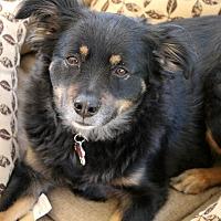 Adopt A Pet :: Molly - Santa Clarita, CA