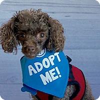 Adopt A Pet :: Lancelot - Pacific Grove, CA