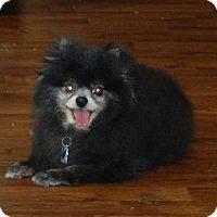 Adopt A Pet :: LARA (Sponsor Me) - Hilham, TN