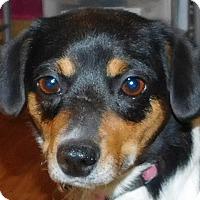 Adopt A Pet :: Lizzy - MINNEAPOLIS, KS
