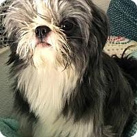 Adopt A Pet :: PJ-ADOPTION PENDING - Boulder, CO