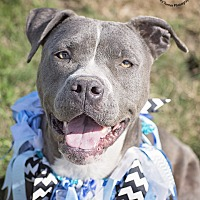 Adopt A Pet :: Derby - Iola, TX