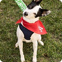 Adopt A Pet :: Jingle - Sacramento, CA