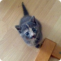 Adopt A Pet :: April - River Edge, NJ