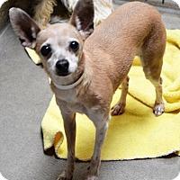 Adopt A Pet :: Bambi - San Jacinto, CA