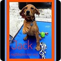 Adopt A Pet :: Jack - Milton, GA