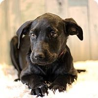 Adopt A Pet :: Reyna - Waldorf, MD