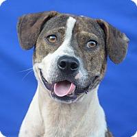 Adopt A Pet :: JOJO - LAFAYETTE, LA