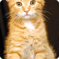 Adopt A Pet :: Oslo - Newland, NC