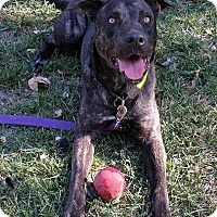 Adopt A Pet :: Conner - Manteca, CA