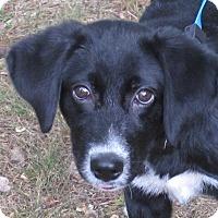 Adopt A Pet :: Palmer - Foster, RI