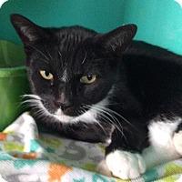 Adopt A Pet :: Jack - Breinigsville, PA