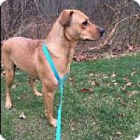 Adopt A Pet :: Emma (In RI) - Foster, RI