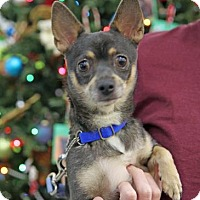 Adopt A Pet :: Amalie - Kettering, OH