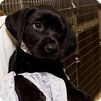 Adopt A Pet :: Sissy - Birmingham, AL