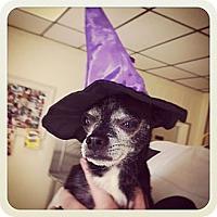 Adopt A Pet :: Nacho - Rockaway, NJ