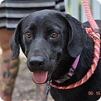 Adopt A Pet :: Ruby - New orleans, LA