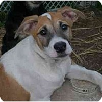 Adopt A Pet :: Bing - Albany, NY