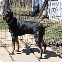 Adopt A Pet :: Lexi--pending - New Richmond, OH