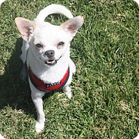 Adopt A Pet :: Stanley - Henderson, NV