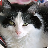 Adopt A Pet :: Jill - St Louis, MO