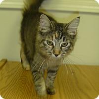 Adopt A Pet :: Kahlua - Hamburg, NY