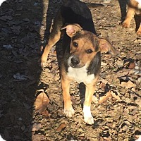 Adopt A Pet :: Clover in CT - East Hartford, CT
