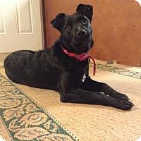 Adopt A Pet :: Eva - Lawrenceville, GA