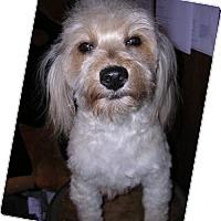 Adopt A Pet :: Nila - Yucaipa, CA
