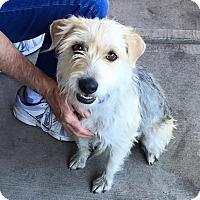 Adopt A Pet :: Carol - Scottsdale, AZ