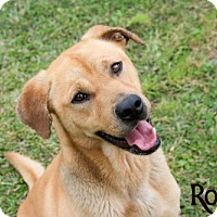 Adopt A Pet :: Rosco - Livingston, LA