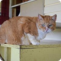 Adopt A Pet :: Jamie - Carencro, LA