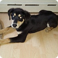 Adopt A Pet :: Lefty - Aurora, IL