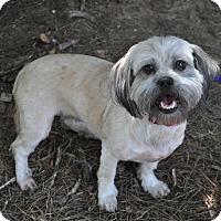 Adopt A Pet :: Audrey - Atlanta, GA
