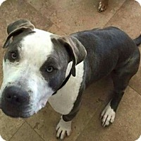 Adopt A Pet :: Sterling - Peoria, AZ