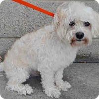 Adopt A Pet :: Wally - Bernardston, MA