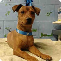 Adopt A Pet :: URGENT on 10/1 SAN BERNARDINO - San Bernardino, CA