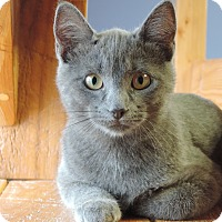 Adopt A Pet :: Juliet - Brookings, SD