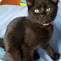 Adopt A Pet :: Ramona - Jeannette, PA