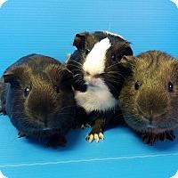 Adopt A Pet :: Catherine, Deanna & Beverly - Lewisville, TX