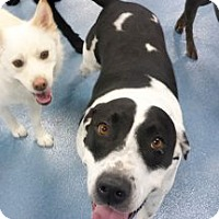 Adopt A Pet :: Denver (Courtesy Listing) - Encinitas, CA