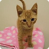 Adopt A Pet :: Killian - Norwich, NY
