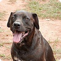 Adopt A Pet :: Napoleon - hartford, CT