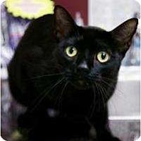 Adopt A Pet :: Johnny Cash - Chicago, IL