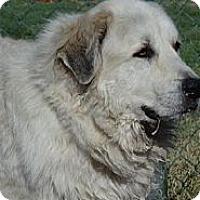 Adopt A Pet :: Elmer - Hamilton, MT