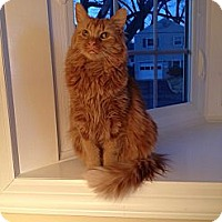 Adopt A Pet :: Lucas - Pittstown, NJ
