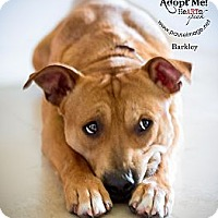 Adopt A Pet :: BARKLEY - Phoenix, AZ