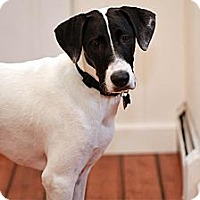 Adopt A Pet :: Shelton - Richmond, VA