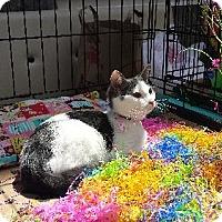 Adopt A Pet :: BRIE - Ridgewood, NY