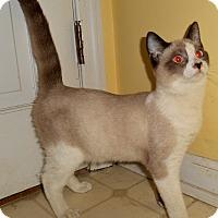 Adopt A Pet :: Tao - Chattanooga, TN